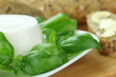 白色乳酪 库存图片