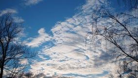 白色云彩和树没有叶子 库存照片