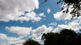 白色云彩和蓝天绿色树定期流逝 股票视频