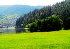 白色云彩,山森林,草原,香格里拉风景 免版税库存照片