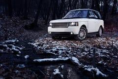 白色优质汽车逗留在微明的森林里 库存照片
