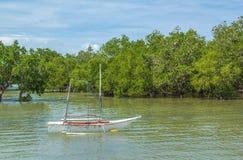 白色传统小船在浮动森林里 免版税图库摄影