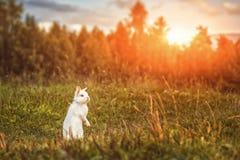 白色兔子或兔宝宝在绿色草甸本质上,愉快的复活节标志 免版税库存图片