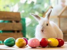 白色兔子用复活节彩蛋说明复活节节日 库存图片