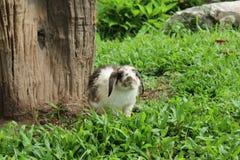白色兔子 库存图片