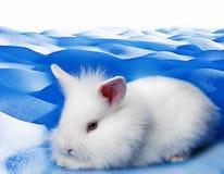 白色兔子 免版税库存照片