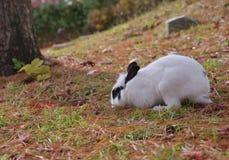 白色兔子Namisum海岛庭院树 免版税图库摄影
