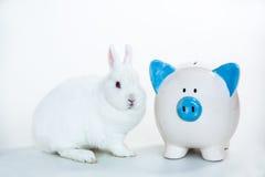 坐在蓝色和白色存钱罐旁边的白色兔宝宝 库存照片