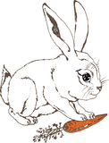 白色兔宝宝用红萝卜 免版税图库摄影