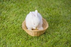 白色兔宝宝 库存照片