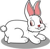 白色兔宝宝 免版税库存照片