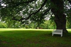 白色公园长椅在一棵大树的树荫下 免版税库存图片