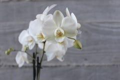 白色兰花和混凝土13 免版税库存图片