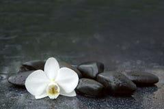 白色兰花和黑石头关闭  免版税库存图片