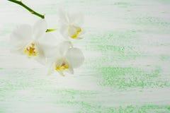 白色兰花植物兰花分支 免版税库存图片