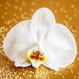 白色兰花植物兰花 免版税库存图片