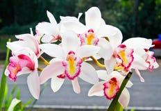 白色兰花瓣在庭院里 免版税库存图片