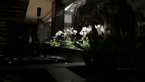 白色兰花设计 影视素材
