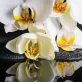 白色兰花(兰花植物),绿色麸皮美好的温泉设置  免版税库存图片