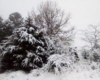白色冬天妙境,覆盖在雪 库存照片