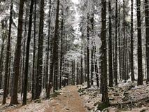 白色冬天季节的冬天冻森林 免版税库存照片