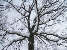 白色冬天树和蓝天,立陶宛 免版税库存照片