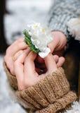 白色冬天花在冻结的手上 免版税库存图片