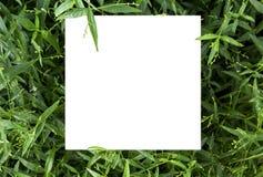 白色卡片的纸嘲笑在Kariy的一朵绿色叶子和花 免版税库存图片