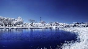 白色叶子和树的领域在湖 库存照片