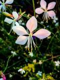 白色和桃红色兰花在密林 免版税图库摄影