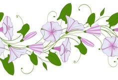 白色和桃红色旋花植物的无缝的样式 有野生植物花的诗歌选 牵牛花嫩装饰品 免版税库存图片