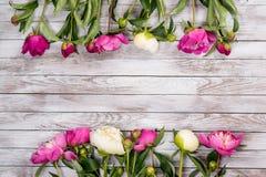 白色和桃红色牡丹在白色被绘的木板条开花 安置文本 方形的图象 顶视图 免版税库存图片
