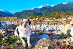 白色和沮丧,雪山,秋天树 免版税库存图片