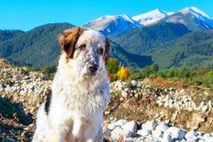 白色和沮丧,雪山,秋天树 库存图片