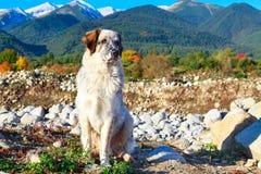 白色和沮丧,雪山,秋天树 免版税图库摄影