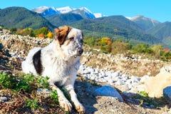 白色和沮丧,雪山,秋天树 库存照片