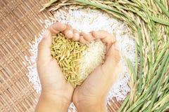 白色和糙米在心形举行了移交白米背景 免版税图库摄影