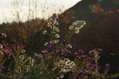 白色和紫罗兰色花在庭院里 免版税库存照片