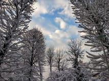 白色和美丽的天空的森林 库存照片