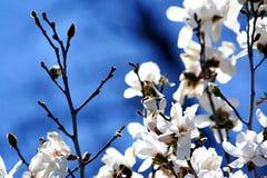 白色和蓝色 免版税库存照片