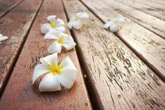 白色和黄色羽毛在老木椅子开花 库存图片