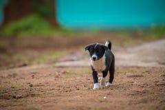 _白色和黑小狗 库存照片