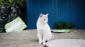 白色和黑色两只无家可归的猫  美丽的动物 影视素材