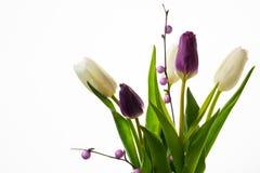 白色和紫色新鲜的郁金香花束 免版税库存照片