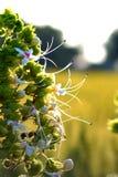 白色和绿色美丽的花 库存图片