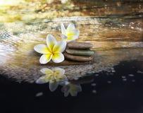 白色和黄色芬芳花羽毛或赤素馨花在cryst 免版税图库摄影