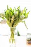 白色和绿色郁金香 免版税库存照片
