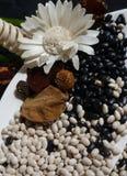 白色和黑豆 免版税库存图片