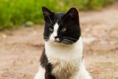白色和黑逗人喜爱的猫猫咪画象  免版税库存照片