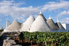 白色在一个农场的一个葡萄园里洗涤了圆锥形被顶房顶的大厦在奇斯泰尔尼诺/阿尔贝罗贝洛地区在普利亚意大利 库存图片